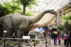 Pekín el museo de la historia natural, sala de exposiciones interior de Asia, China, Foto de archivo