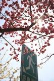 Pekín Huangchenggen arruina el parque Fotos de archivo libres de regalías