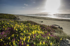 Peka Peka plaża Obrazy Royalty Free