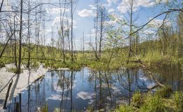 Pekhorka river in the reserve `Moose island`. Moscow region. Russian Federation. Spring 2018 Royalty Free Stock Photos