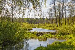 Pekhorka river in the reserve `Moose island`. Moscow region. Russian Federation. Spring 2018 royalty free stock photography