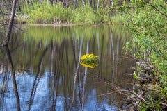 Pekhorkarivier in het eiland ` van reserve` Amerikaanse elanden Het gebied van Moskou Russische Federatie royalty-vrije stock foto's