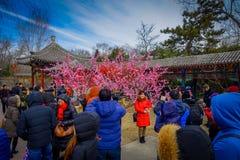 PEKIN, CHINY - 29 STYCZEŃ, 2017: Uczęszczać nowego roku świętowania festiwal w świątyni ziemia park, udziały czerwień Obrazy Royalty Free