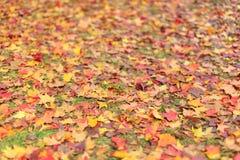 Pekin ditan park, ziemi jesień liście Zdjęcie Royalty Free