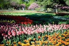Pekin ogród botaniczny Obraz Royalty Free