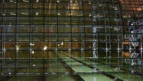 Pekin Porcelanowy Krajowy Uroczysty Theatre w odbiciu w jezioro wodzie przy wieczór nocą zbiory