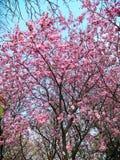 Pekin Yuyuantan w Kwietniu fotografia stock