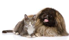 Pekines och katt tillsammans bakgrund isolerad white Arkivfoto