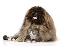 Pekinese, der Katze umarmt Getrennt auf weißem Hintergrund Stockfoto