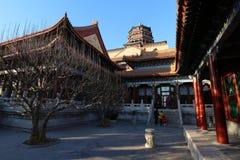 Peking för sommarslott Arkivfoto