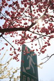 Peking Huangchenggen fördärvar parkerar royaltyfria foton