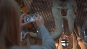 PEKING KINA - OKTOBER 26, 2018: Den unga kvinnan tar en bild av ett skelett av ett kolossalt ett naturhistoriamuseum lager videofilmer