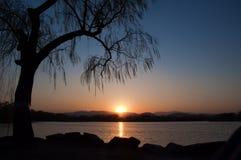 Peking sjö- och trädkontur royaltyfria bilder