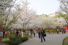 Peking Yu Yuan Tan Park Cherry Blossom Festival 3 Stock Afbeeldingen