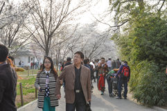 Peking Yu Yuan Tan Park Cherry Blossom Festival 4 Stock Afbeeldingen