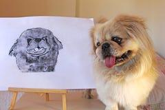 pekingese的狗 免版税图库摄影