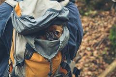 Pekingese в рюкзаке Стоковые Фотографии RF
