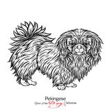 Pekingese. Black and white graphic drawing of a dog. Vector illustration Royalty Free Stock Photo