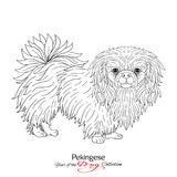 Pekingese. Black and white graphic drawing of a dog. Vector illustration Stock Photo