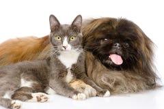 Pekingese and cat together. isolated on white background Royalty Free Stock Image