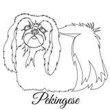 Pekingese dog outline. Vector illustration Stock Image