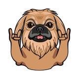 Pekingese dog. Rock gesture. Horns. Dog portrait. Pekingese breed. Vector. Pekingese dog. Rock gesture. Horns. Dog portrait. Pekingese breed. Vector Royalty Free Stock Image