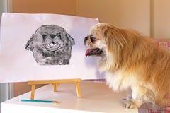 Pekingese dog. Watches his drawing royalty free stock image