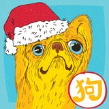 Pekingese or Lion Dog in Santa hat. Funny portrait of cute dog, breed Pekingese or Lion Dog, yellow color, in Santa hat. The inscription in Chinese, meaning Dog Stock Photos
