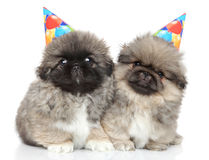 Pekingese puppies in party cones Royalty Free Stock Photos