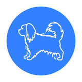 Pekingese vector icon in black style for web Stock Images