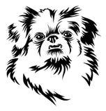 Pekingese. Vector image of a head of a pekingese dog Royalty Free Stock Photos