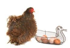 Pekinkip en eieren royalty-vrije stock afbeelding