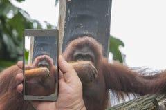 Pekskärmsmartphone i en hand royaltyfria foton