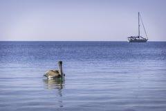 Pelícano Foto de archivo libre de regalías