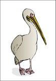 Pelícano en el fondo blanco stock de ilustración