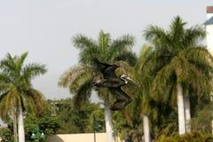Pelícano en la Florida fotos de archivo