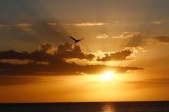 Pelícano en la puesta del sol Imagenes de archivo