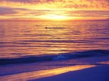 Pelícano en la puesta del sol Imagen de archivo libre de regalías