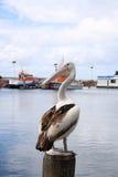 Pelícano en un poste fotos de archivo