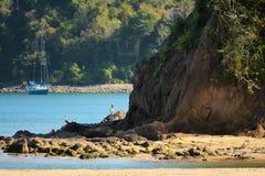 Pelícano que descansa sobre las rocas en una ensenada Imagen de archivo