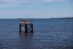Pelícanos en el marcador del canal fotografía de archivo