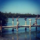 Pelícanos en el muelle por la bahía imágenes de archivo libres de regalías