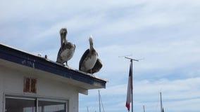 Pelícanos en el tejado metrajes