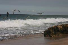 Pelícanos en línea de la playa fotos de archivo libres de regalías