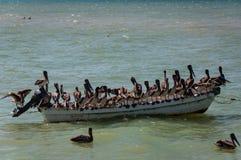 Pelícanos en un barco viejo Foto de archivo
