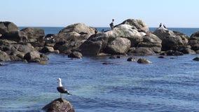 Pelícanos en un lado de la playa almacen de video