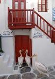 Pelícanos que esperan delante de una taberna en Mykonos Imagen de archivo libre de regalías