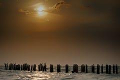 Pelícanos que se encaraman Foto de archivo libre de regalías