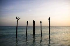 Pelícanos que se reclinan sobre postes Foto de archivo