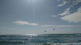 Pelícanos que se zambullen, playa de la llave de Seista Imagen de archivo libre de regalías